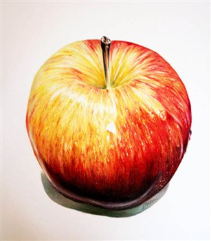 Apple -- Coloured Pencil -- 8 x 8 inches