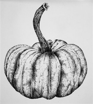 Ornamental Gourd -- Pen & Ink-- 8 x 7 inches