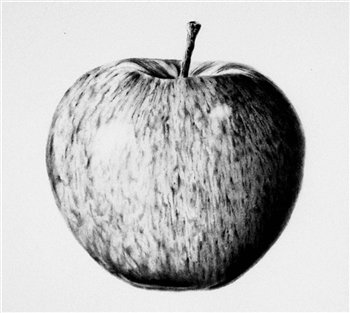 Apple -- Graphite -- 8 x 8 inches
