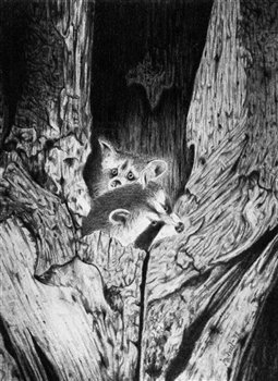 Raccoons in a Tree -- Graphite on illustration board -- 20 x 15 inches