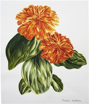Zinnia in watercolour 12 x 13 inches